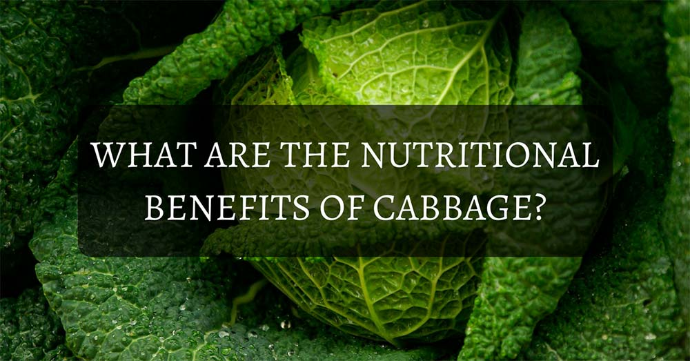 Nutritional Benefits of Cabbage